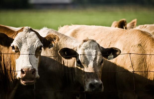 South Dakota State Vet Advises Documenting Livestock Losses