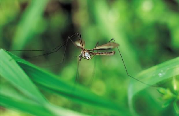 Mosquito Season Is Here