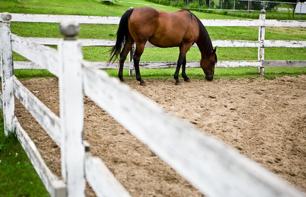 R CALF Guardedly Optimistic Over Court Decision On Horse Slaughter