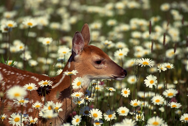 Chronic wasting disease suspected in 30 Mich. deer