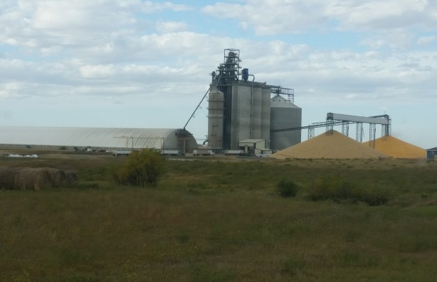 Grain Trader Cover Letter