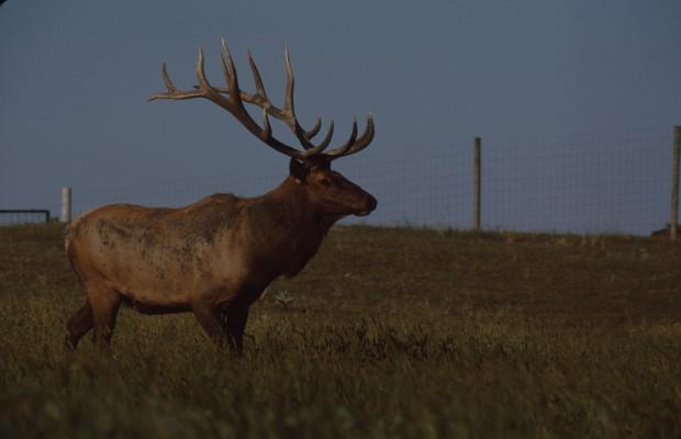 Iowa hunting fishing license fees to go up radio 570 wnax for Iowa fishing license online