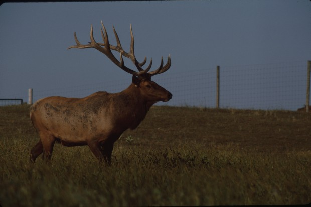 Iowa hunting fishing license fees to go up radio 570 wnax for Iowa fishing regulations