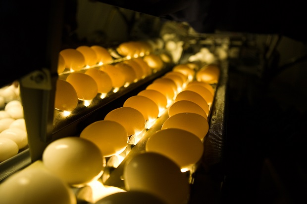 Rembrandt Foods to Build Cage-Free Egg Facility in Lake Preston SD & Rembrandt Foods to Build Cage-Free Egg Facility in Lake Preston ... azcodes.com