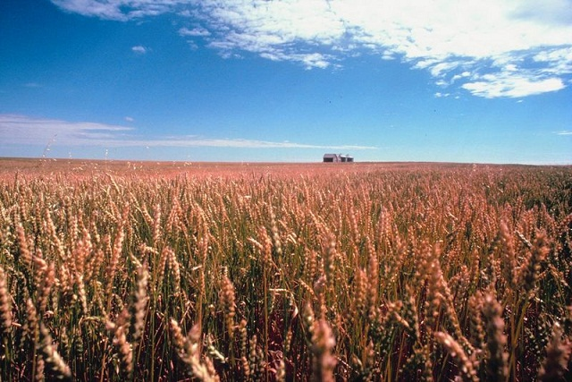 groups want change in canadian grain grading system radio 570 wnax