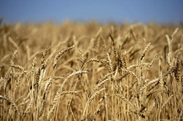 egypt changes fungus policy on wheat radio 570 wnax